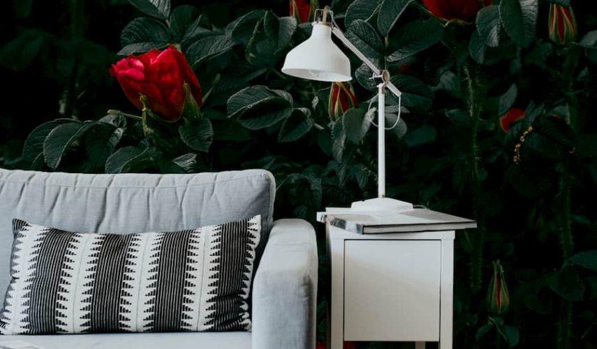 Foto tapetas rožės