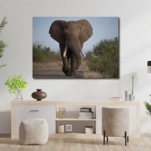 Foto drobė dramblys
