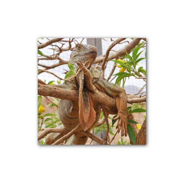 Foto drobė Iguana